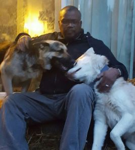 me-and-the-dogs